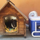Hot Dog House UPDATED! - Keeping Your Fuzzy Friend Cool All Summer Long