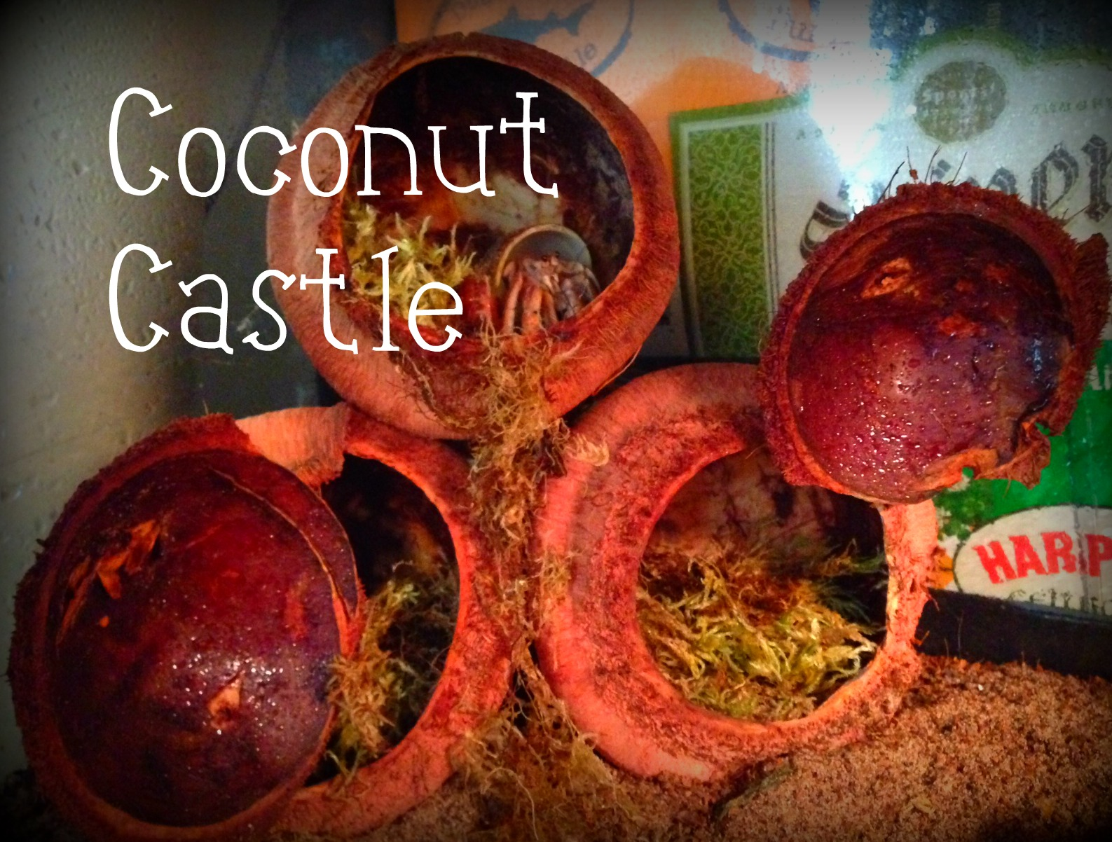 Picture of How to Spoil Your Hermit Crabs: Coconut Castle