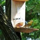 Self-dosing bird feeder