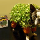 Echo the Chia Pet Dog Costume