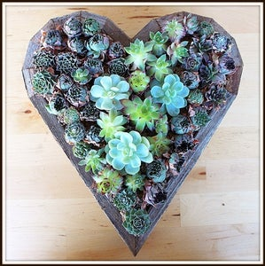 Keep the Heart Flat at First So the Succulent Roots Can Grow.