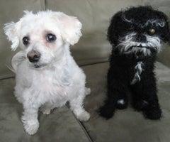 Sake the Knitted Dog