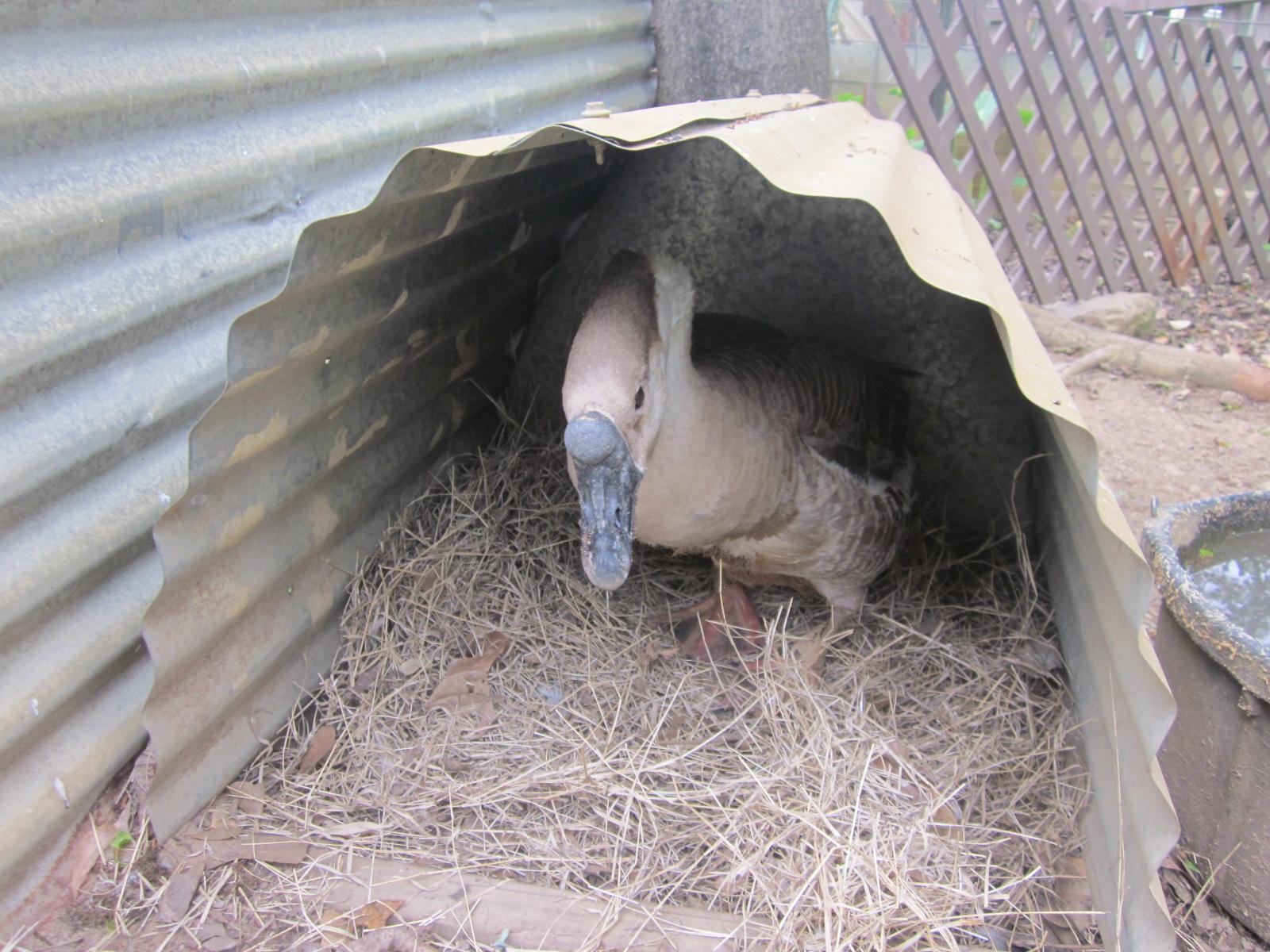 Picture of Duplex Goose Nest