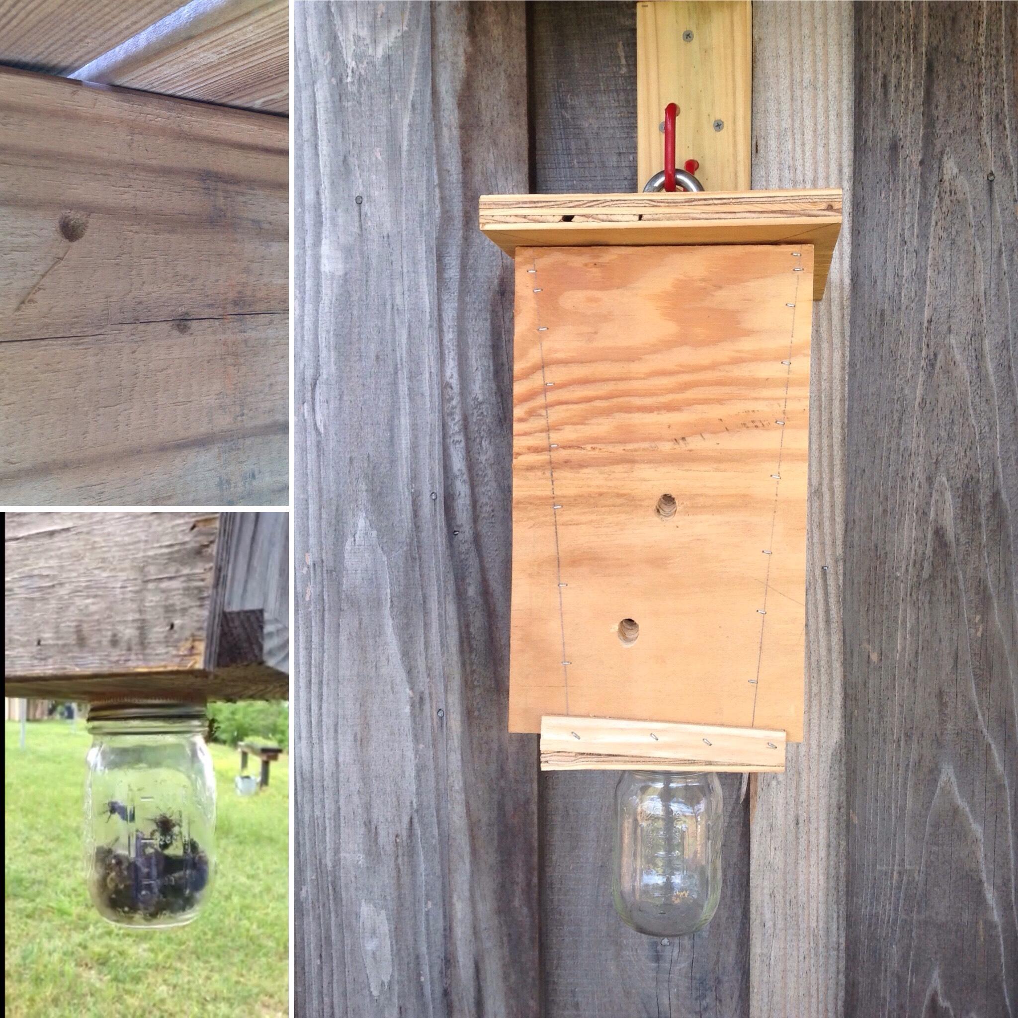 Picture of Carpenter Bee Trap