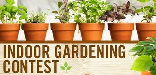 Indoor Gardening Contest