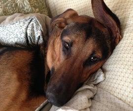 Homemade Dog Food - for Sensitive Tummies