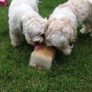 Simple Summer Treat for Dogs, Beat the Heat!