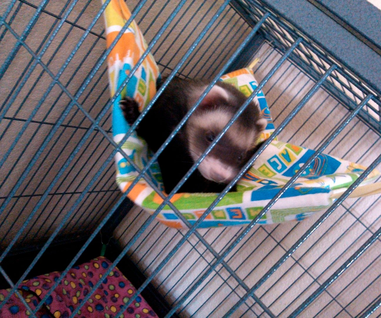 It's Hammock Time! (Ferret Sleepsack)