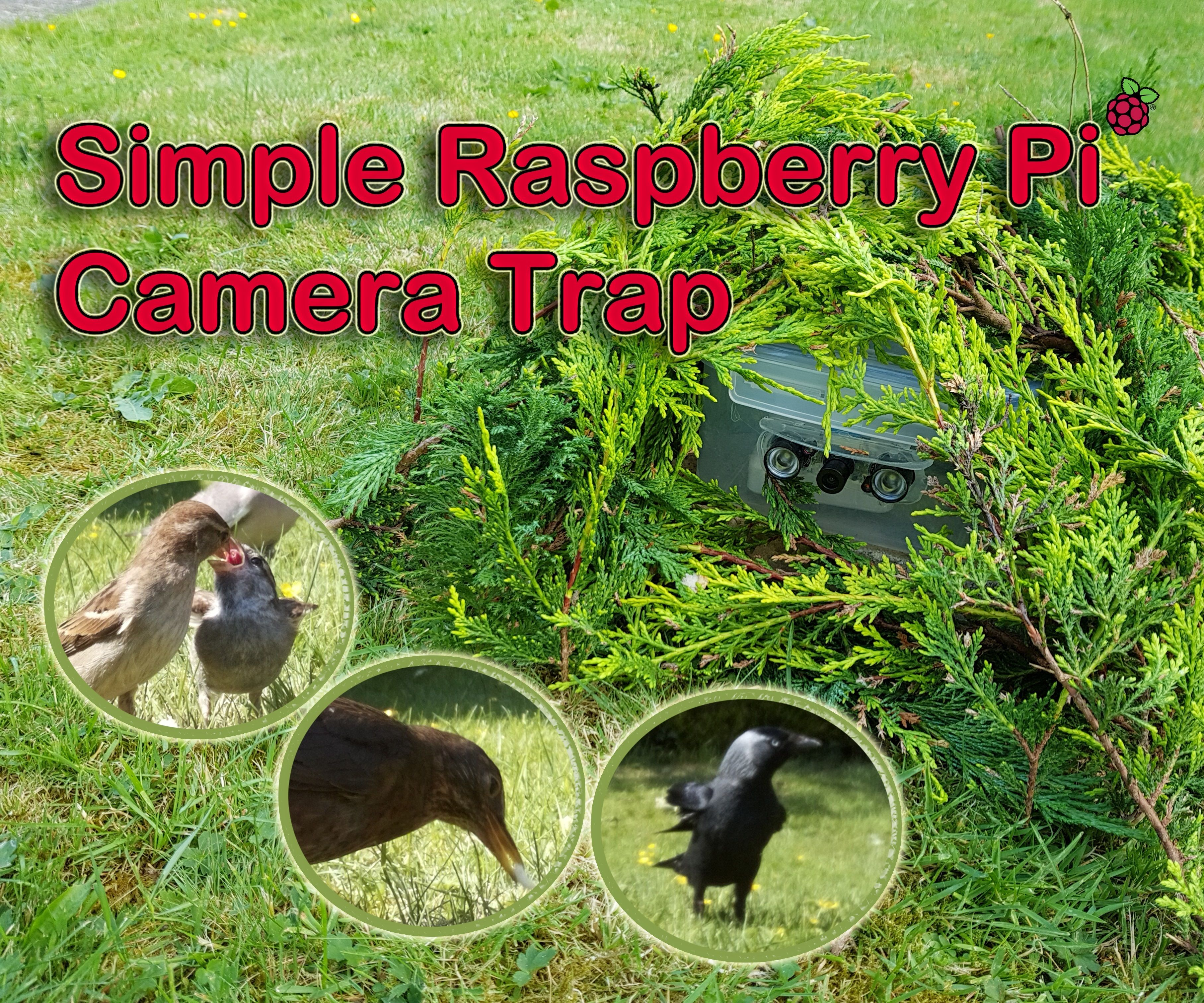 Simple Raspberry Pi Camera Trap Made From a Food Container: 6 Steps