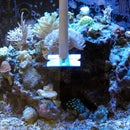 Aquarium Scraper for Stubborn Algae