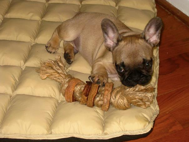 """Picture of """"Indestructible"""" Dog Toy"""