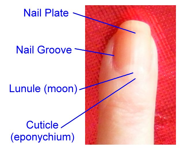 Picture of DIY Professional Looking Manicures and Fingernail Art