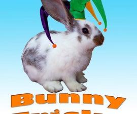 How to teach your bunny simple tricks!