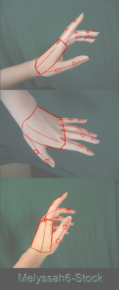 Picture of Parts of the Hand