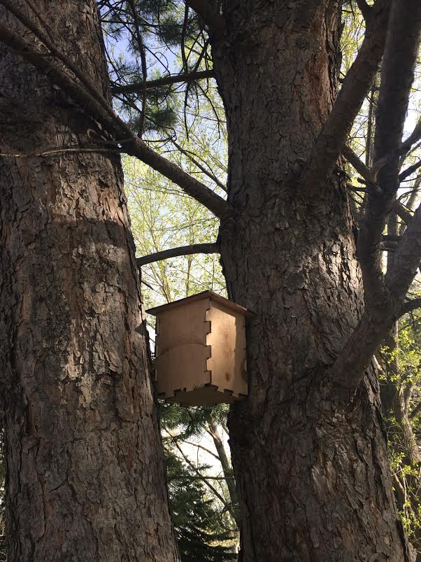 Picture of Put Birdhouse in a Tree