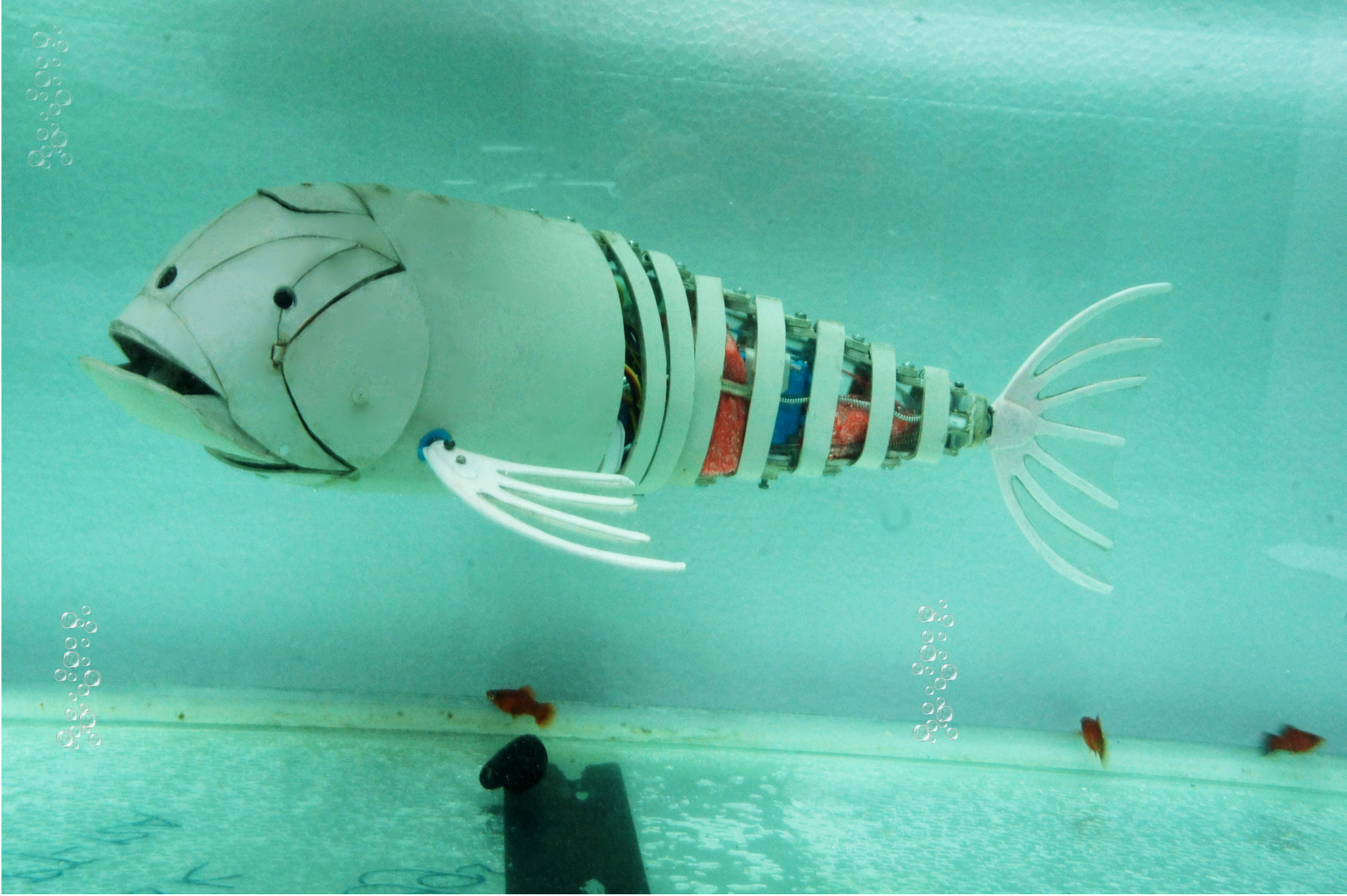 Picture of RoboFish Made From Pvc Water Pipe