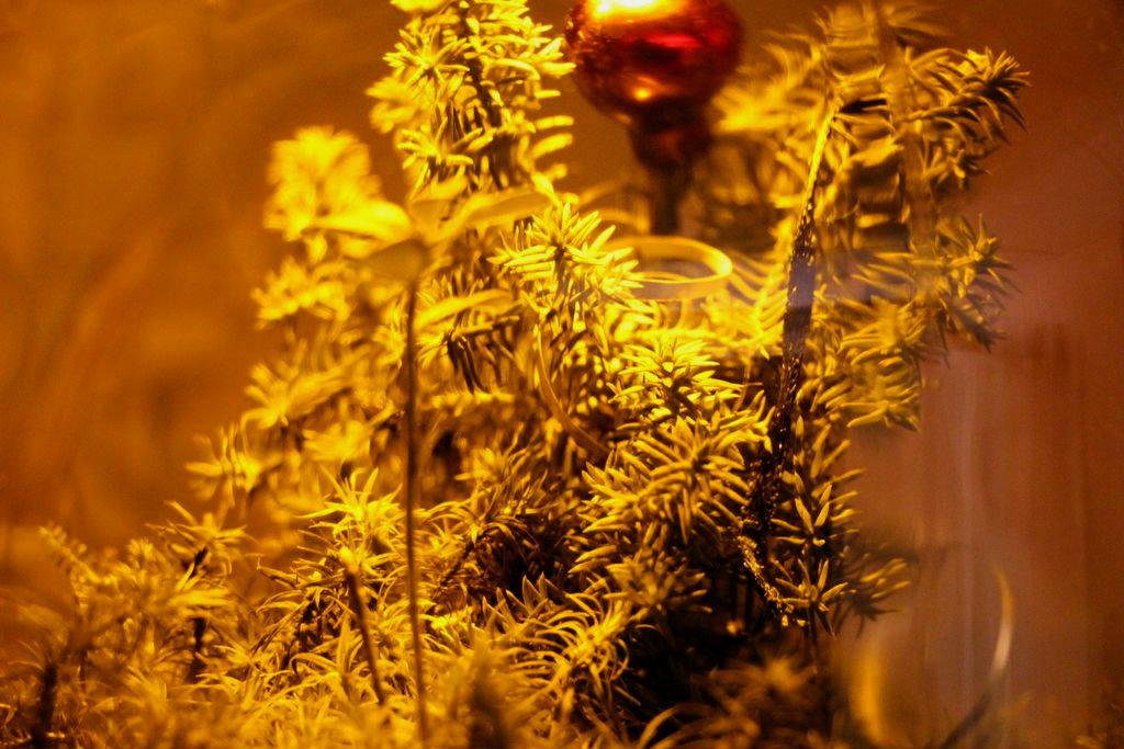 Picture of Christmas Terrarium Nighlight