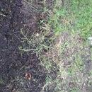 My Garden: Asparagus