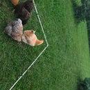 Sprinkler Chicken Fence