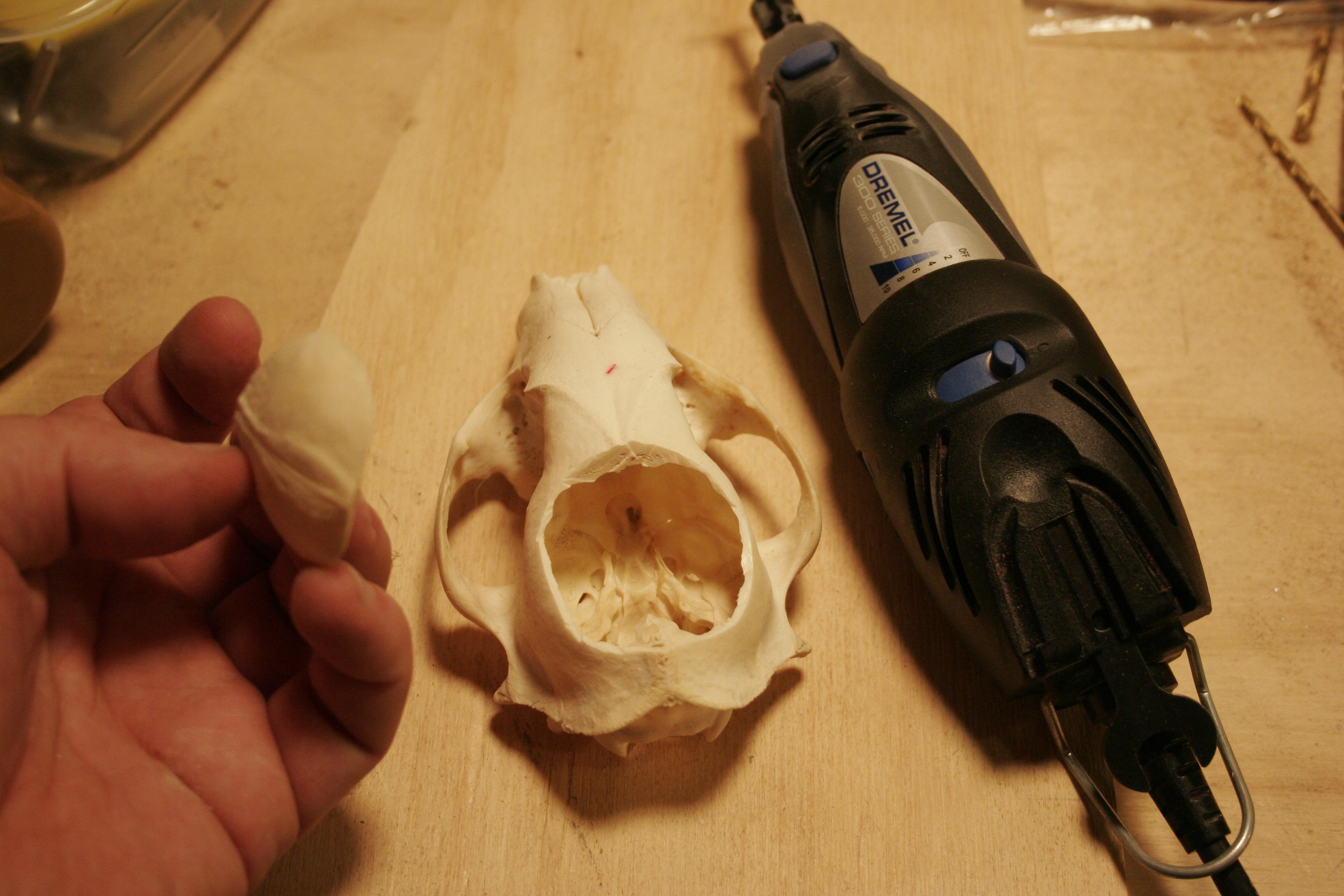 Picture of Preparing the Skull