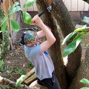 Removing the Treehouse