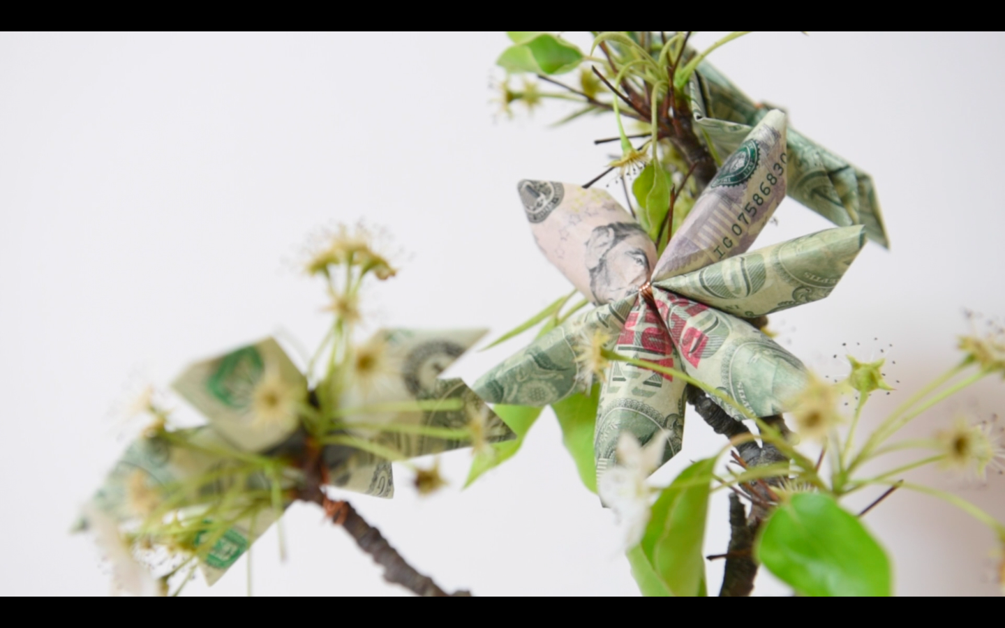 Picture of Money Tree: Origami Dollar Flowers