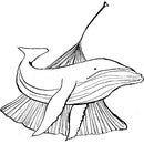 ginkgowhale