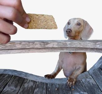 Dog Biscuits - No Measuring