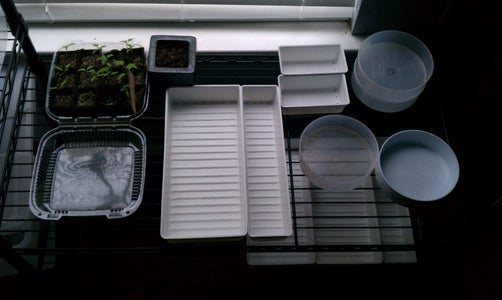 Get Some Seed Trays