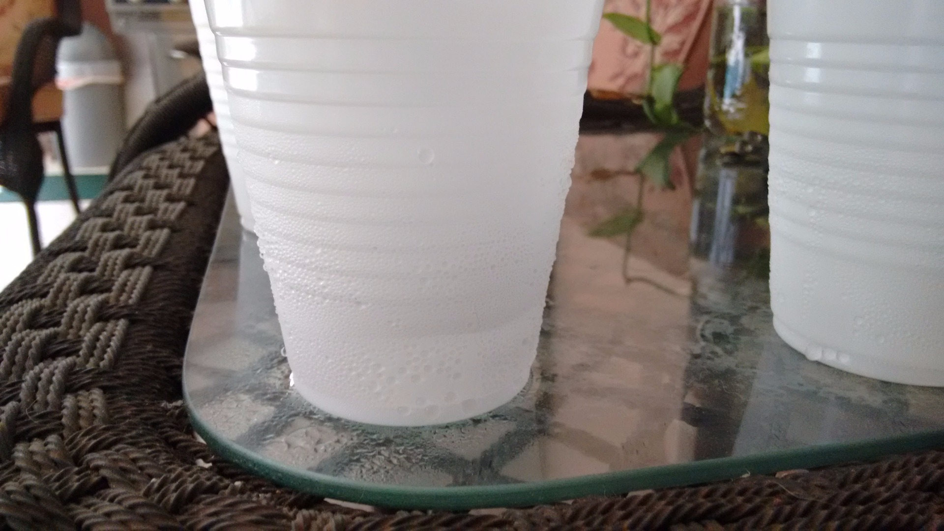 Picture of The Results: Single Cup