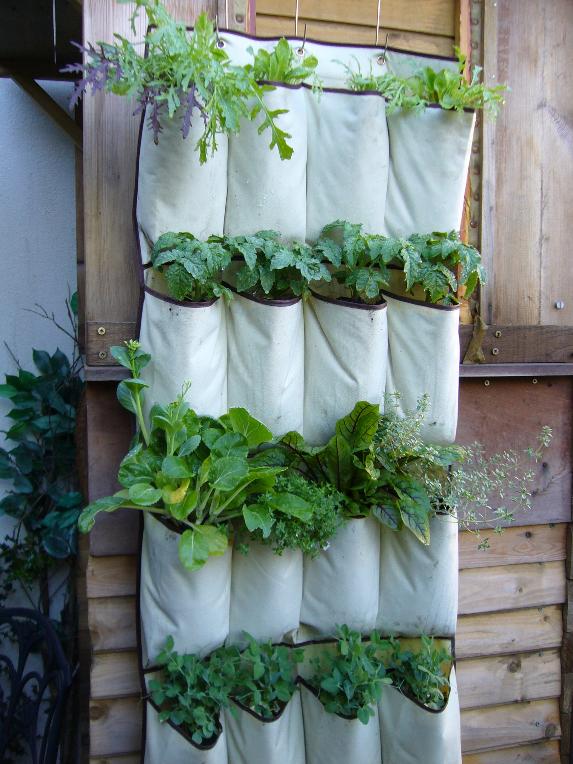 Hanging Herb Garden Kitchen Vertical Vegetables Grow Up In A Small Garden And Confound The