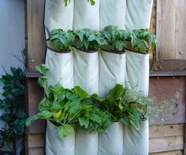"VERTICAL VEGETABLES: ""Grow up"" in a small garden and confound the cats!"