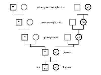 Haplotypes