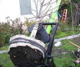 Transplant a Tree With a Giant Two Wheel Dolly