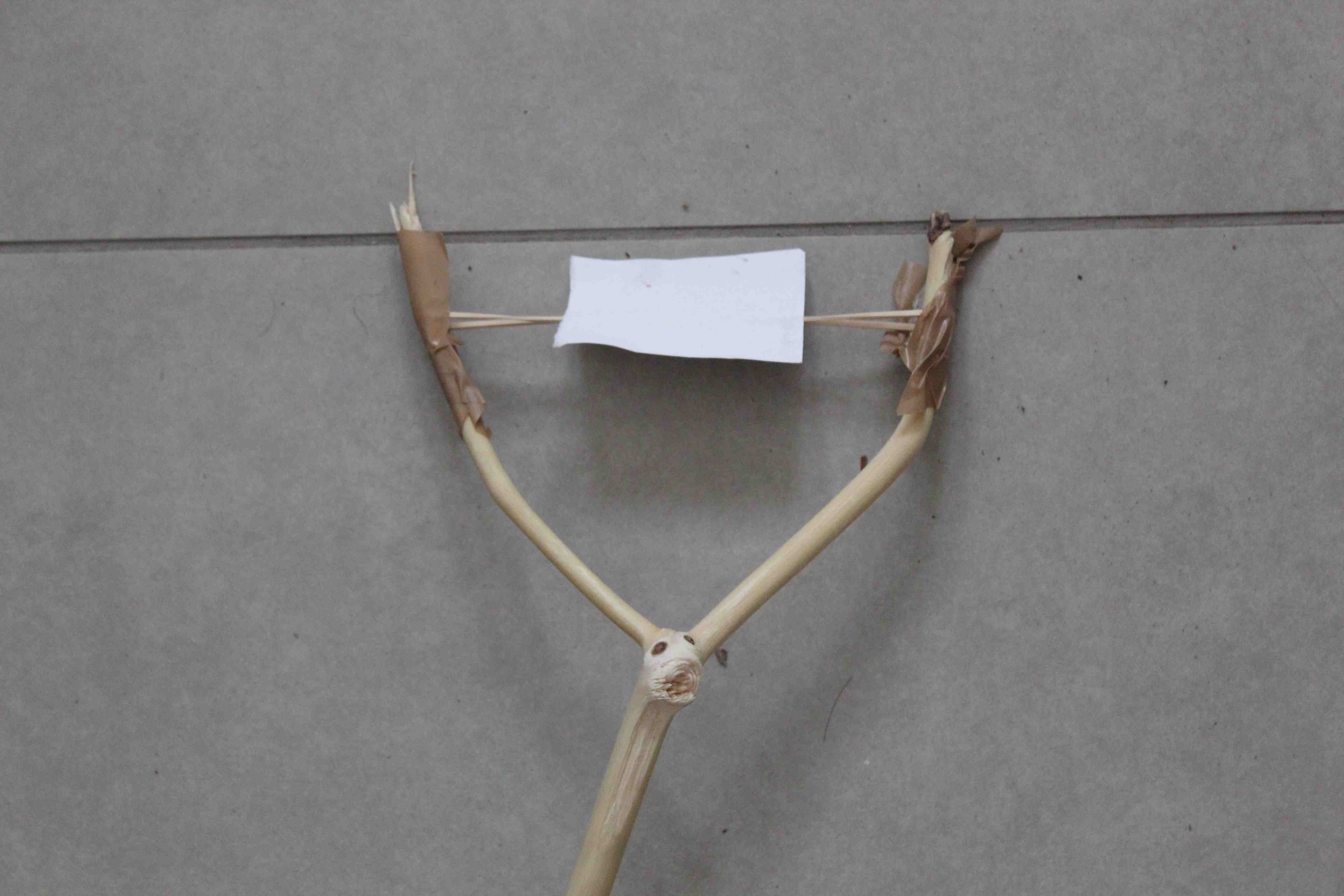 Picture of Make the Slingshot