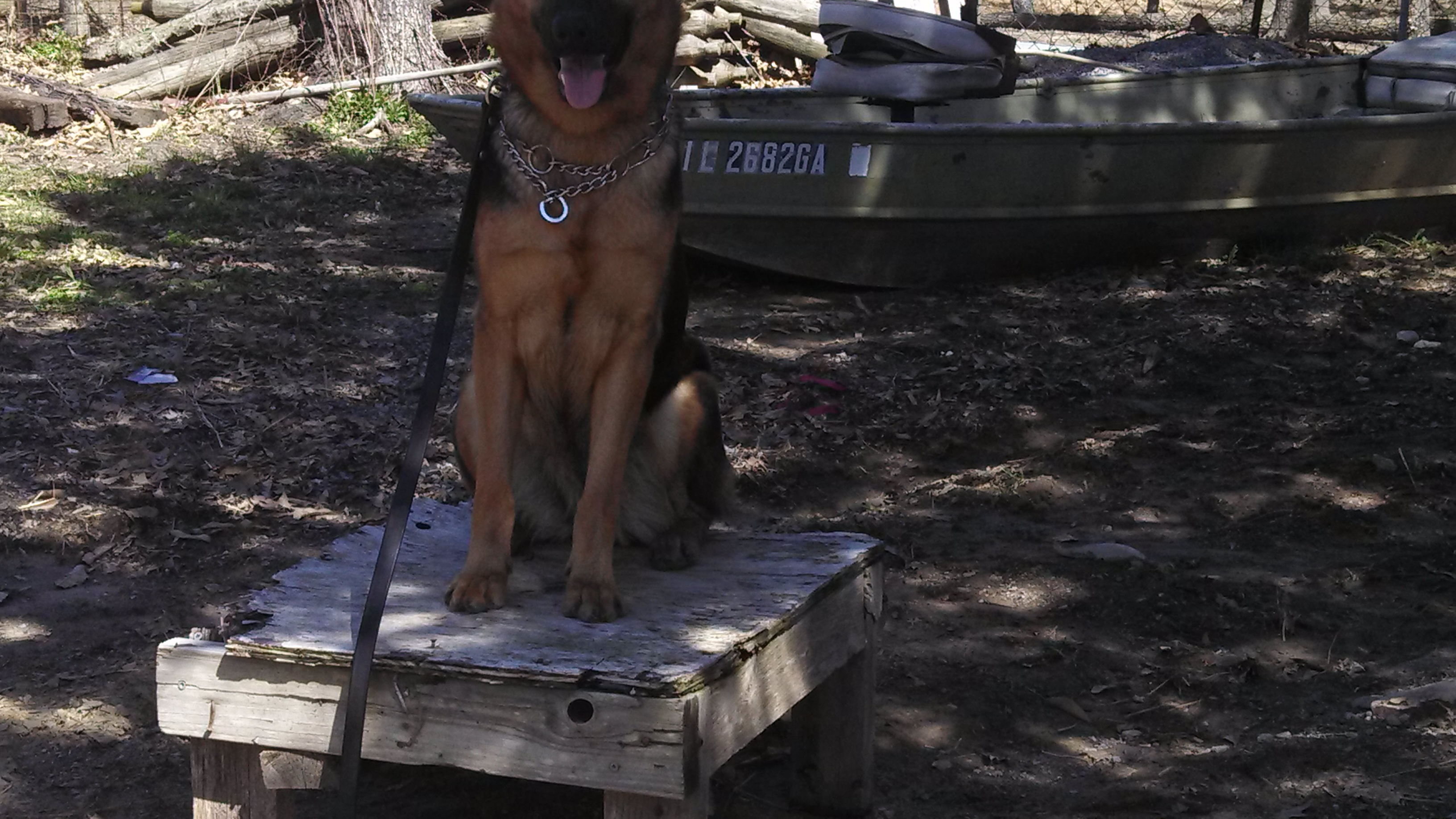 Picture of Easy Dog Training With a Plotz Table
