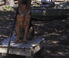 Easy Dog Training with a plotz table