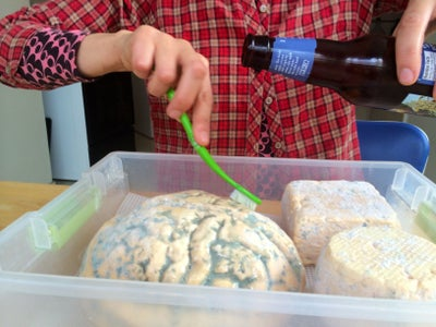 Brush Brain With Beer Regularly