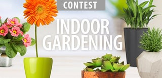 Indoor Gardening Contest 2016
