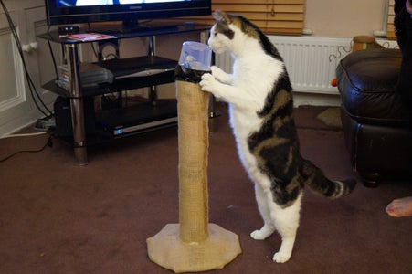 Cat-proofing
