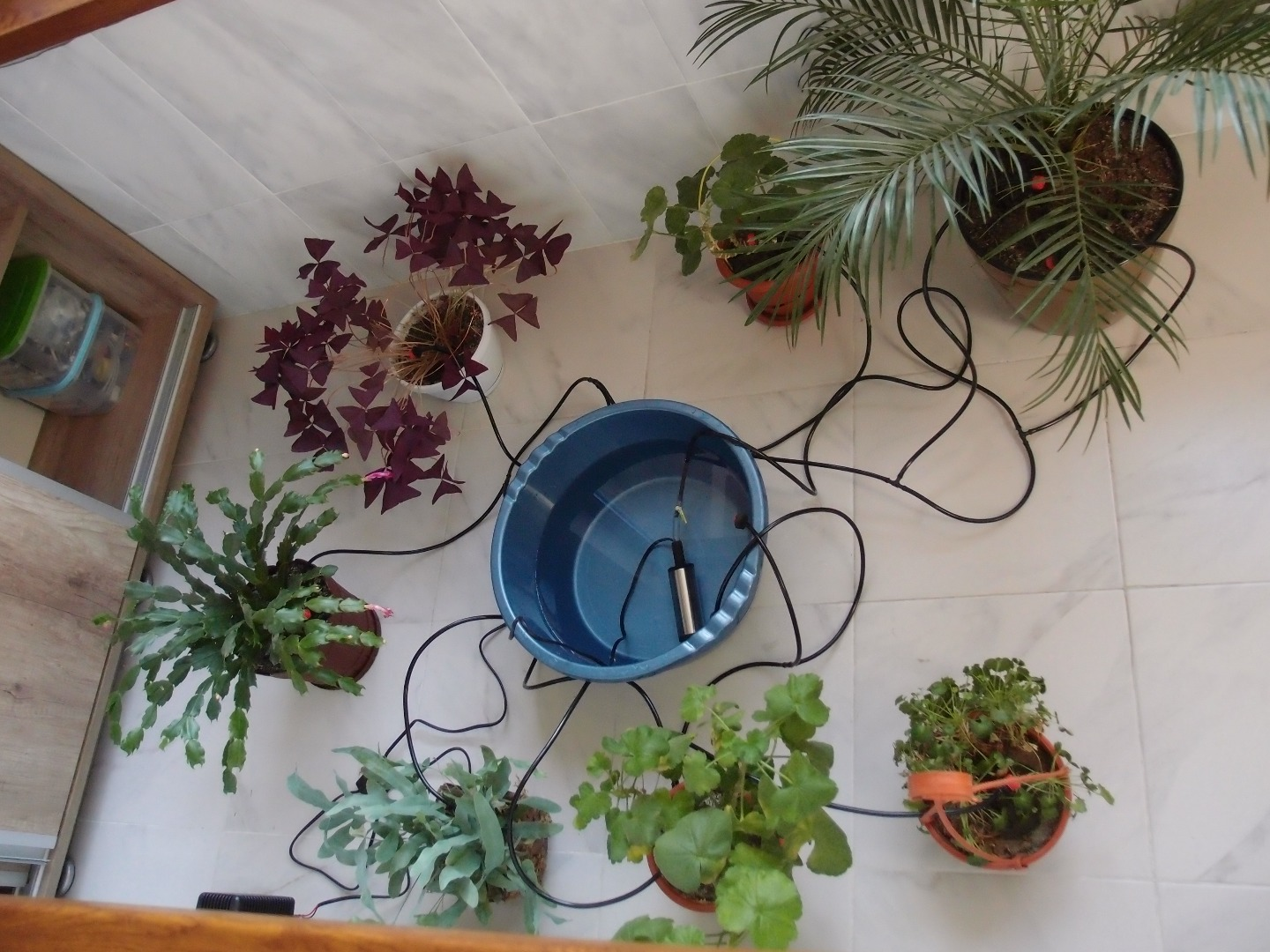 Picture of Micro Irrigation System for House Plants