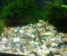 Cheap automatic aquarium feeder on the go.