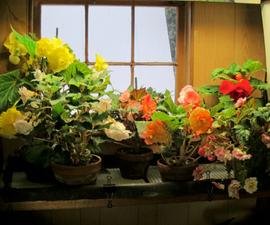 Flowering Plants Under Lights