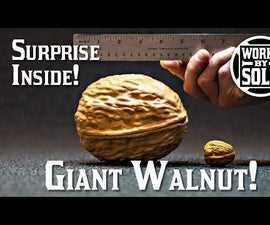 The Making of a Giant Walnut Prop