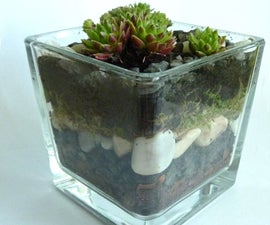 How to make a tiny glass garden