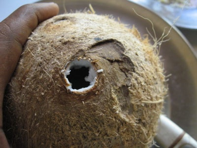 Open the Coconut