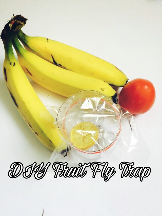 Picture of DIY Fruit Fly Trap