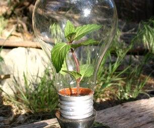 """Lightbulb """"green""""house"""