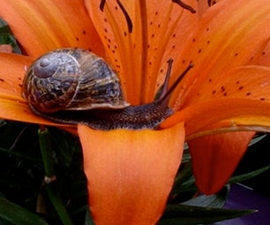 How to Get Rid of Snails and Slugs