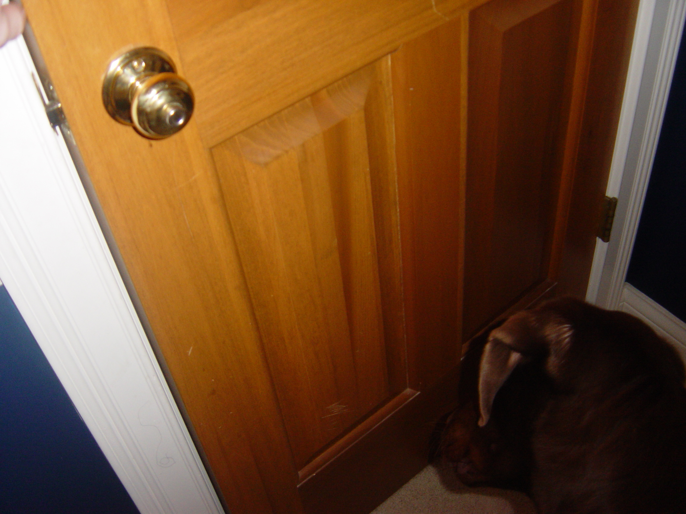 Picture of Close the Door!